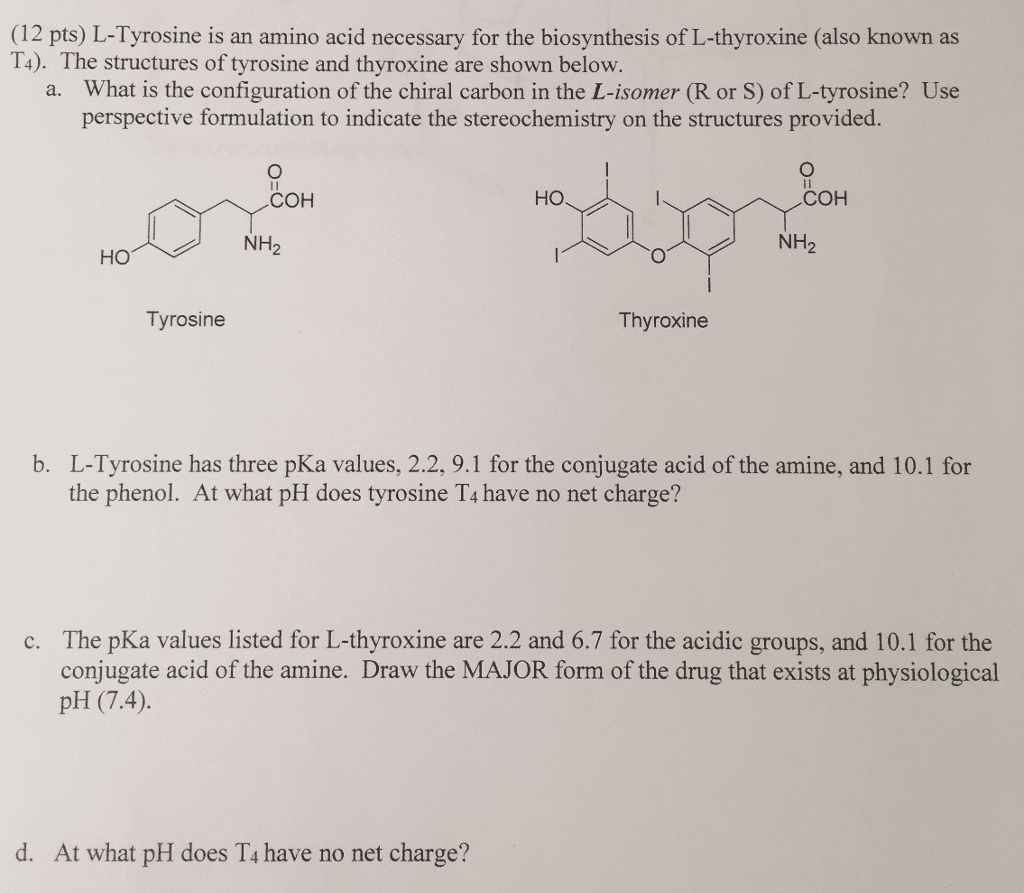 Oneclass 12 Pts L Tyrosine Is An Amino Acid Necessary For The
